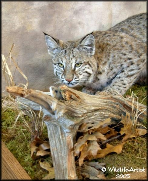 Mounting Bobcats Predatormasters Forums
